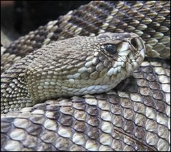 snake removal Grapevine